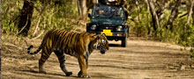 Forts and Palaces with Wildlife Tour Package